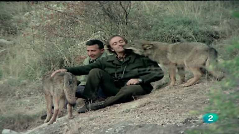 Felix Rodriguez De La Fuente Y El Lobo Censo Lobo Iberico