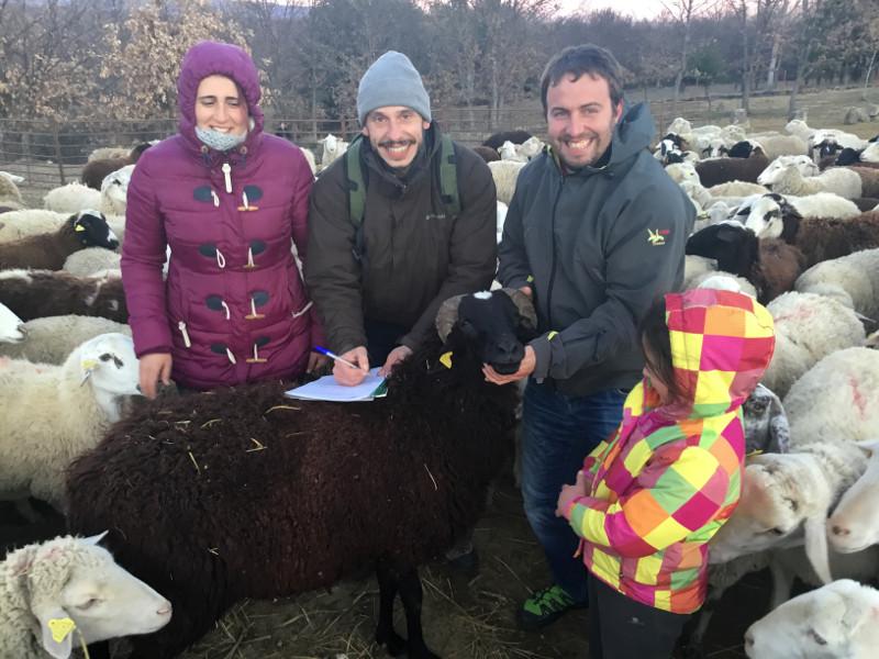 Pastando con lobos, un proyecto de ganadería respetuosa con el lobo avalado por GREFA
